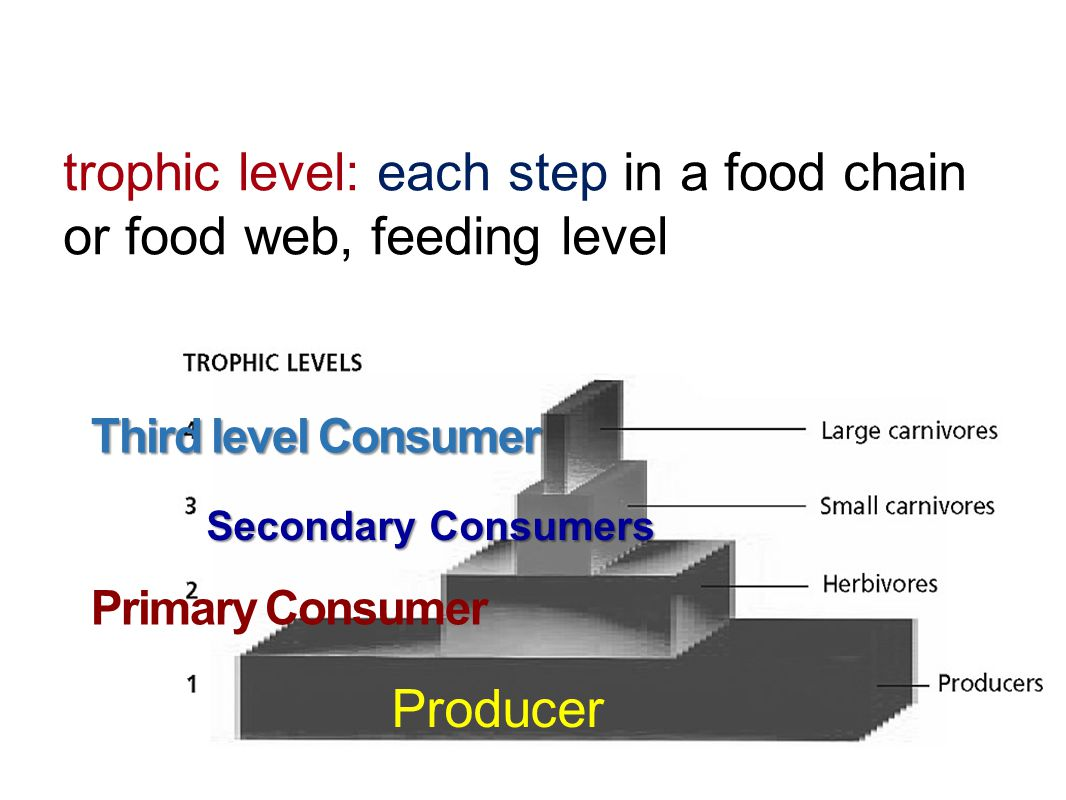 trophic level: each step in a food chain or food web, feeding level
