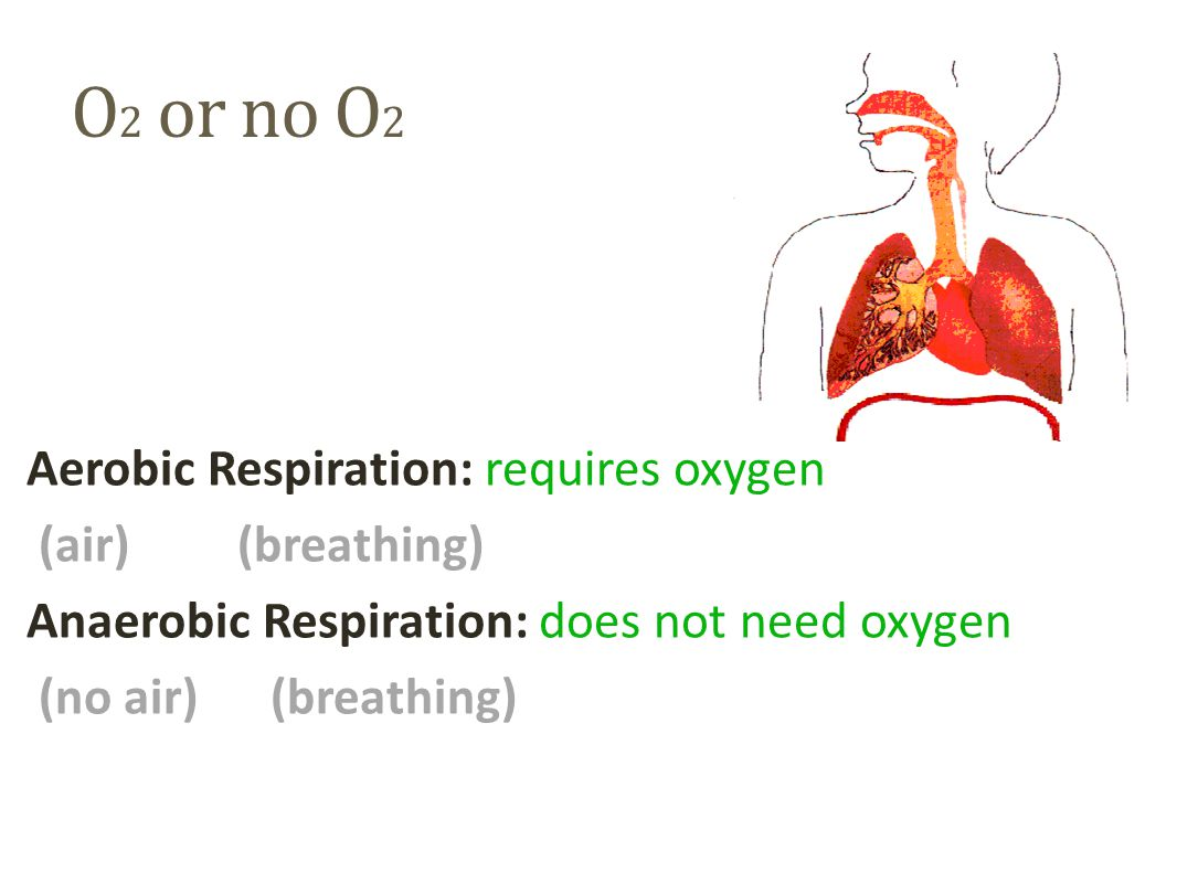 O2 or no O2 Aerobic Respiration: requires oxygen (air) (breathing) Anaerobic Respiration: does not need oxygen (no air) (breathing)