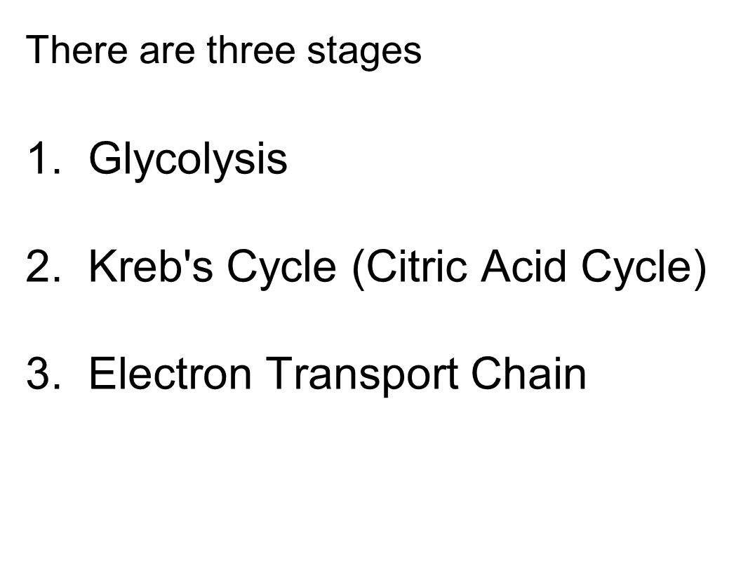 2. Kreb s Cycle (Citric Acid Cycle) 3. Electron Transport Chain