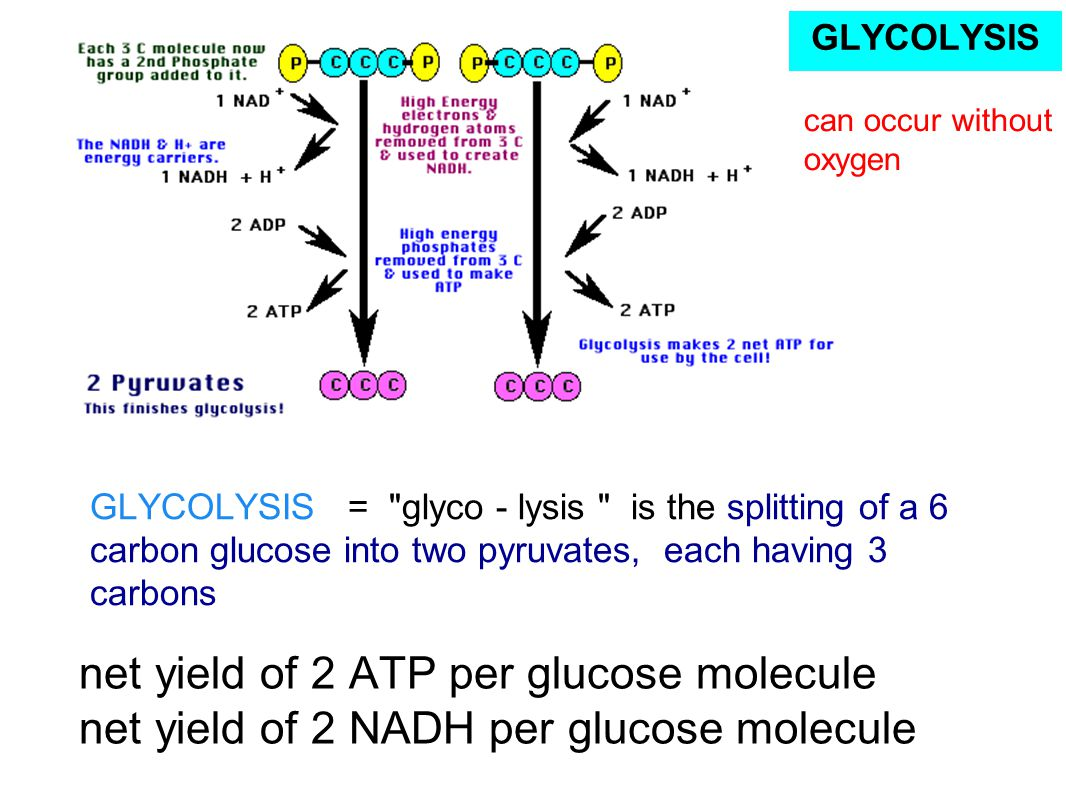 GLYCOLYSIS can occur without oxygen.