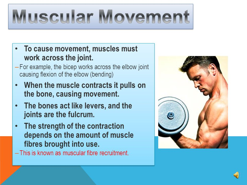 Muscular Movement To cause movement, muscles must work across the joint.