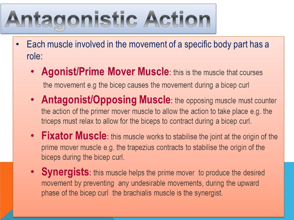Antagonistic Action Each muscle involved in the movement of a specific body part has a role: