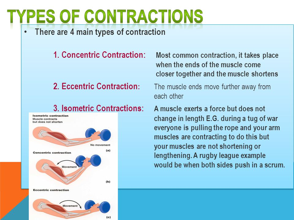 Types of contractions There are 4 main types of contraction