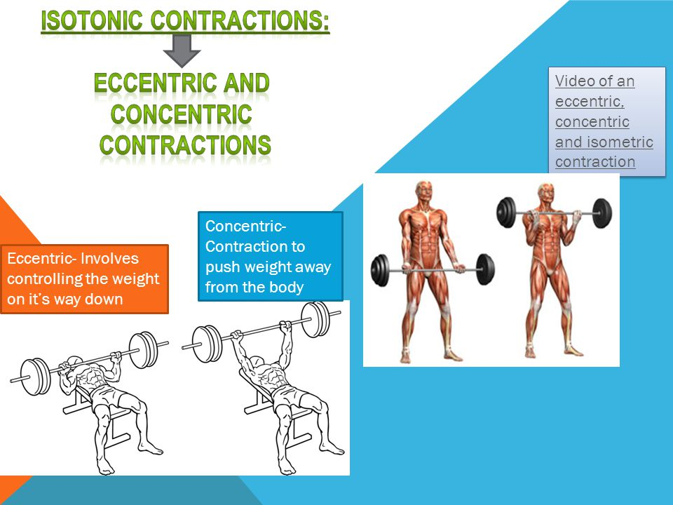 Isotonic Contractions: