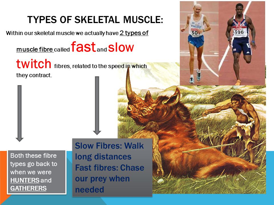 Types of Skeletal Muscle: