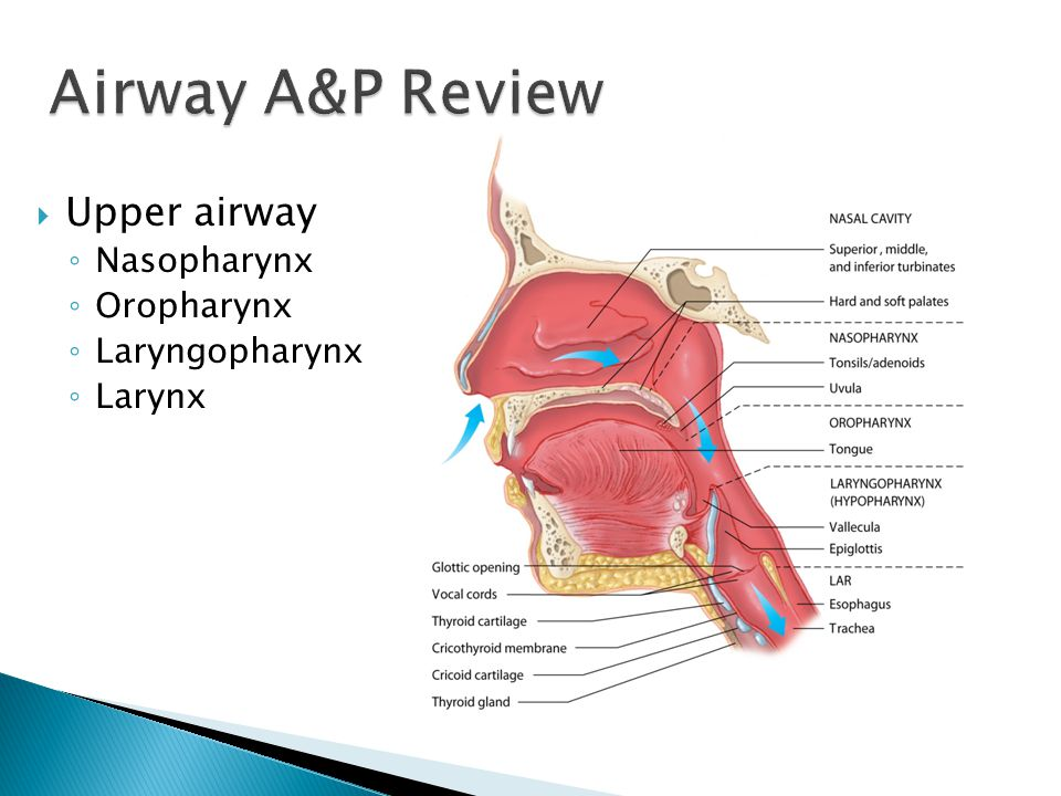 Airway A&P Review Upper airway Nasopharynx Oropharynx Laryngopharynx
