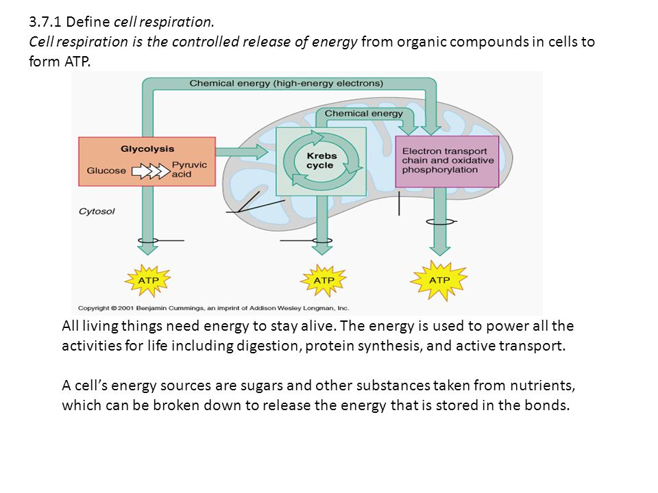 3. 7. 1 Define cell respiration