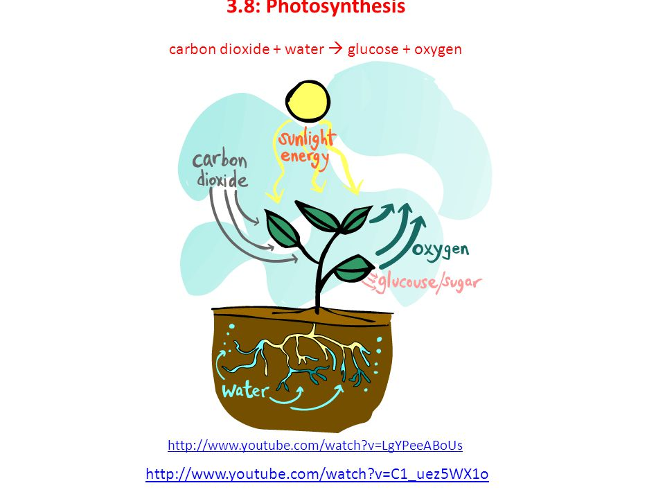 3.8: Photosynthesis carbon dioxide + water  glucose + oxygen