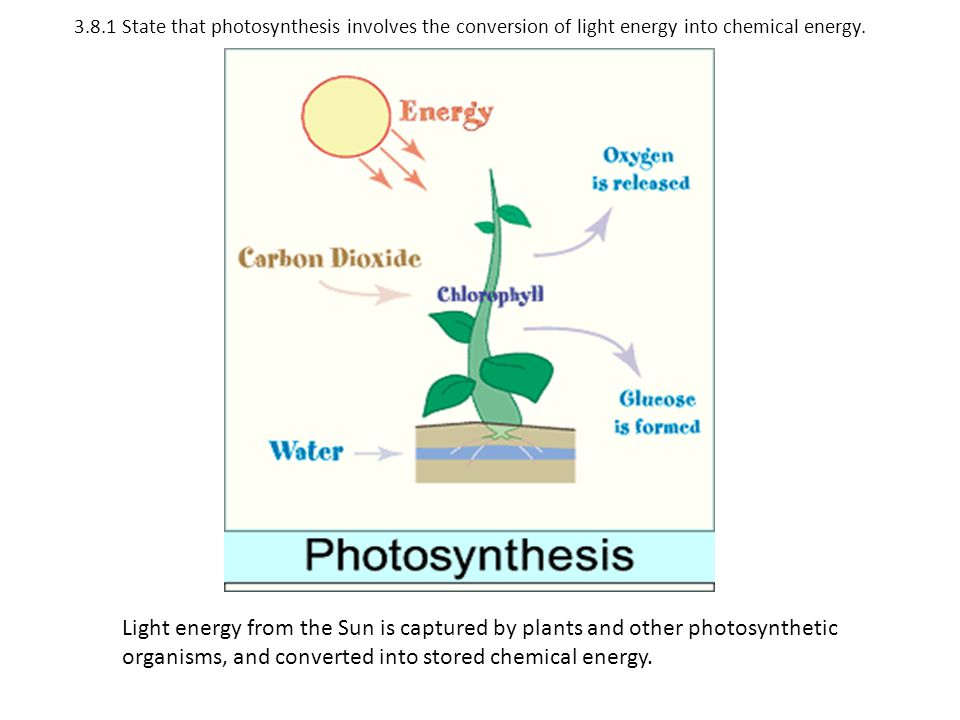381 State That Photosynthesis Involves The Conversion Of Light Energy Into Chemical