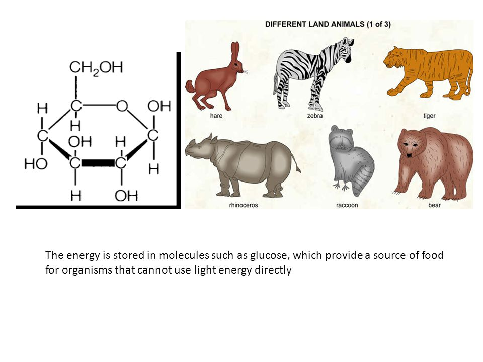 The energy is stored in molecules such as glucose, which provide a source of food for organisms that cannot use light energy directly