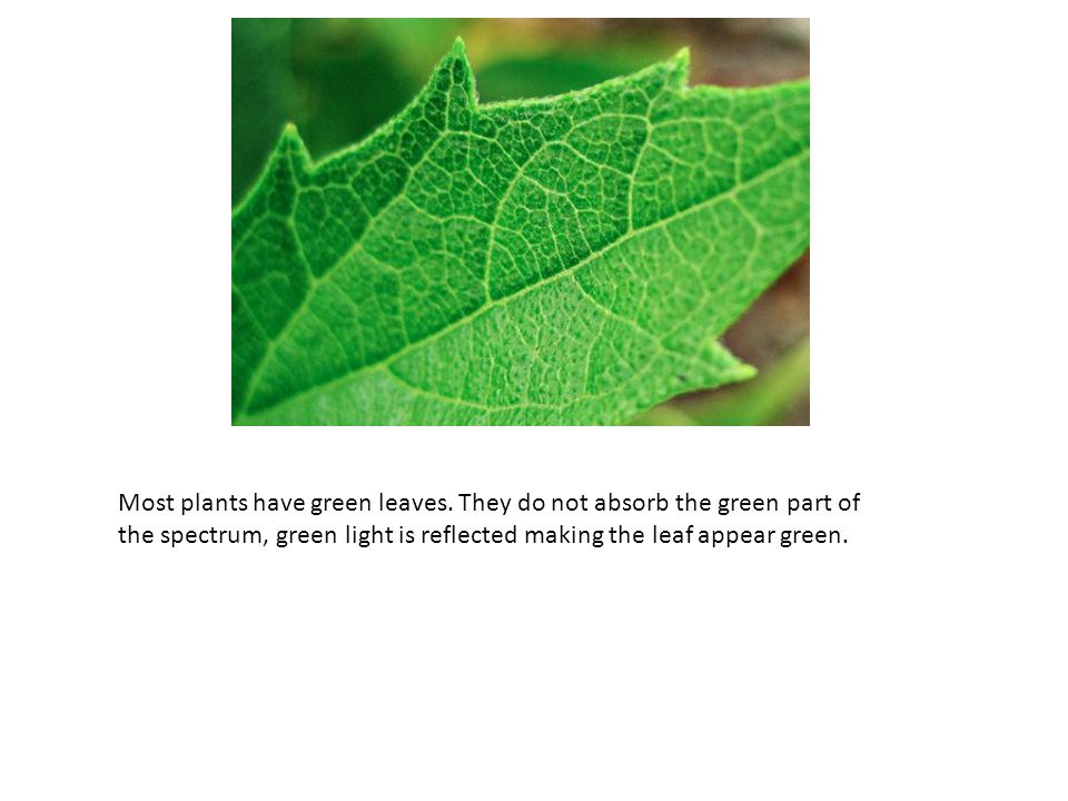 Most plants have green leaves