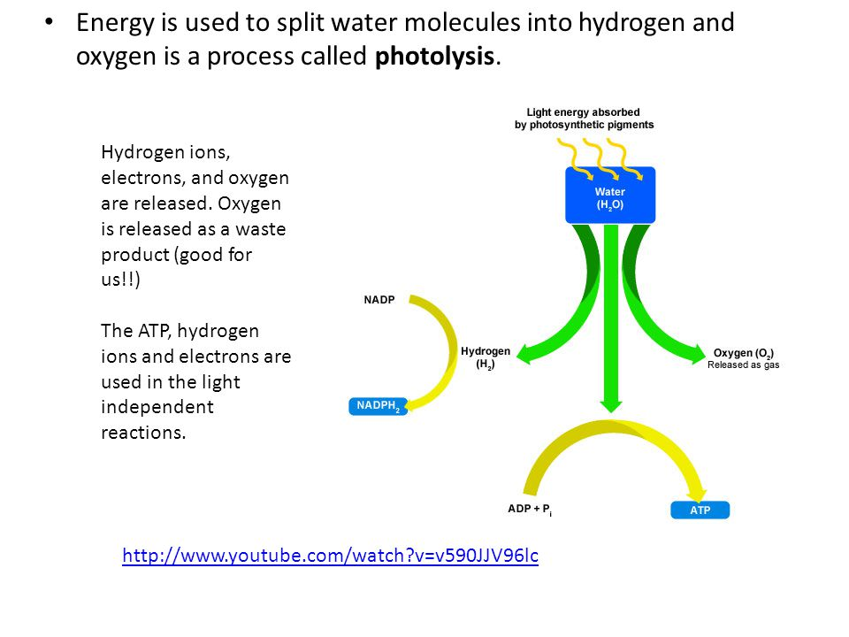 Energy is used to split water molecules into hydrogen and oxygen is a process called photolysis.