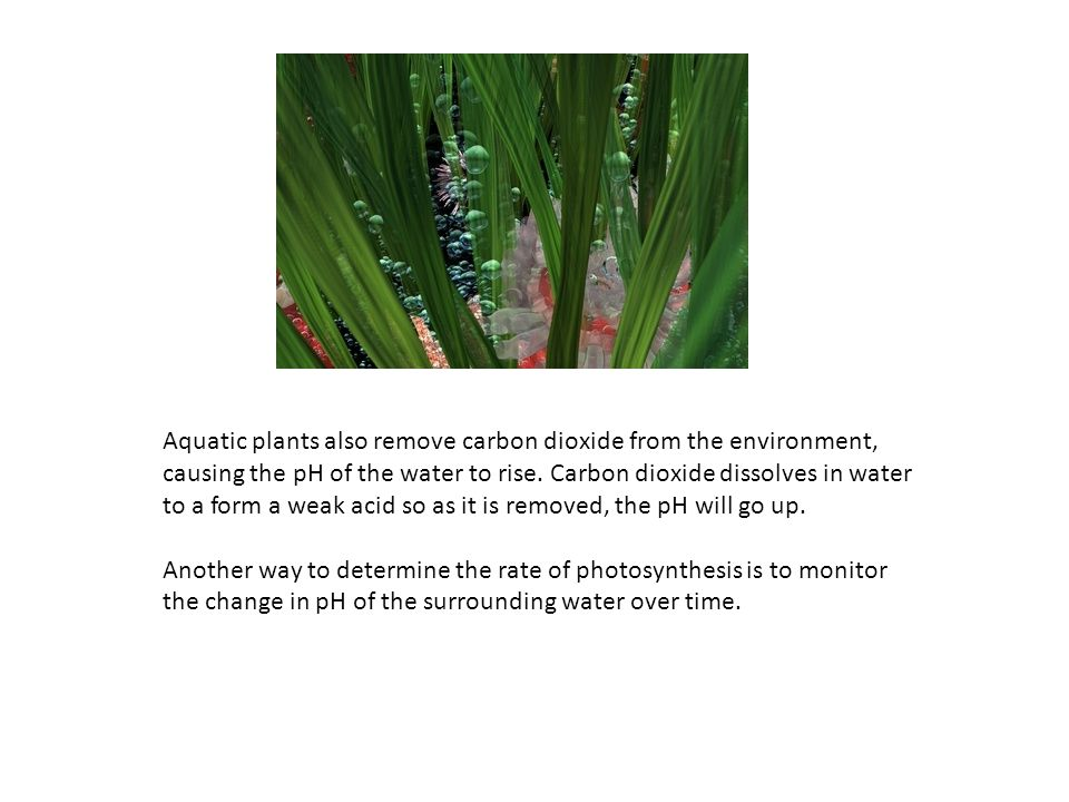 Aquatic plants also remove carbon dioxide from the environment, causing the pH of the water to rise. Carbon dioxide dissolves in water to a form a weak acid so as it is removed, the pH will go up.