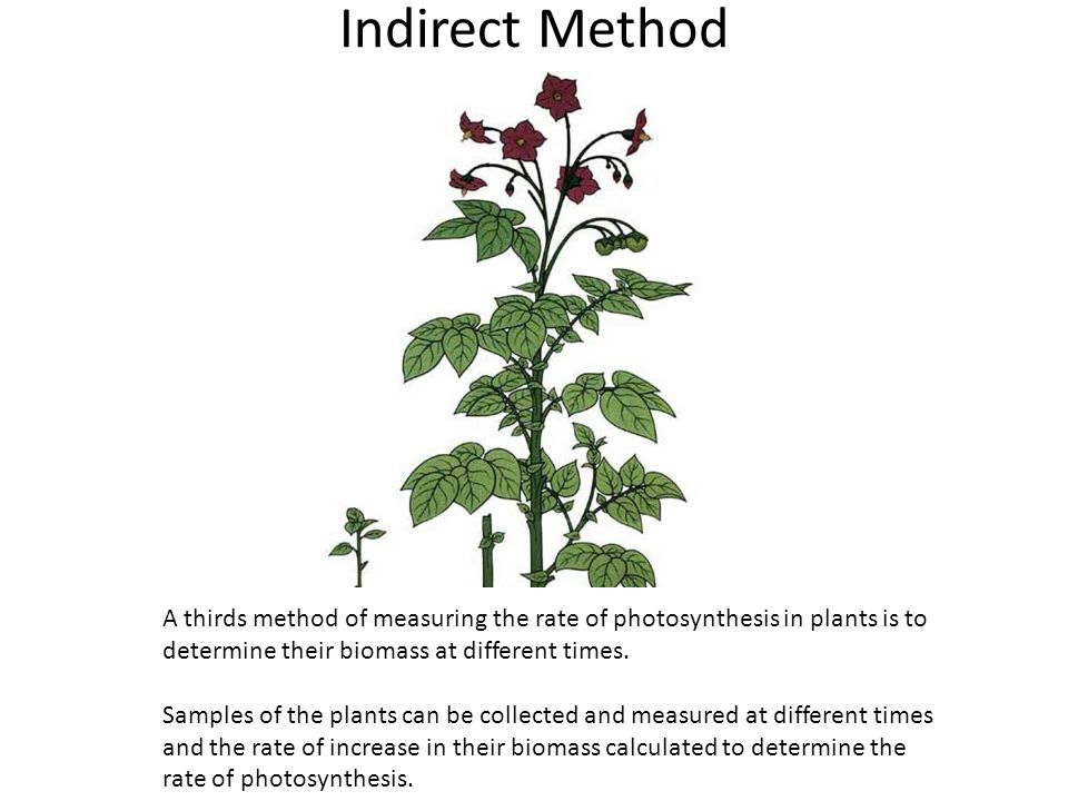 Indirect Method A thirds method of measuring the rate of photosynthesis in plants is to determine their biomass at different times.
