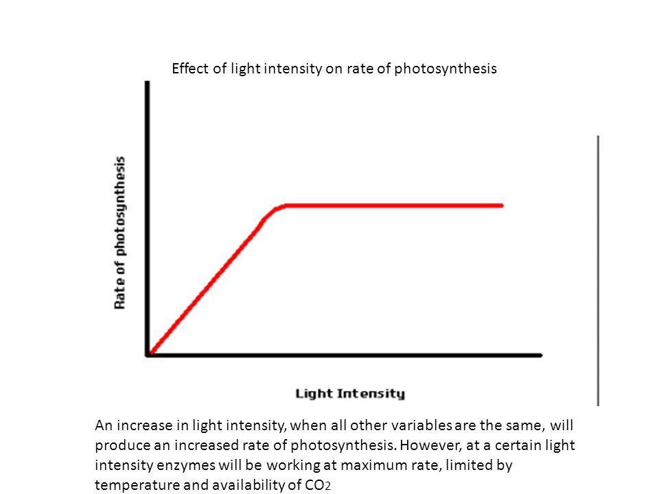 Effect of light intensity on rate of photosynthesis