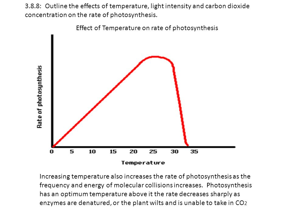 the effect of temperature on photosynthesis Investigating factors that affect the rate of photosynthesis in elodea aim: to find out which factors affect the rate of photosynthesis in elodea.