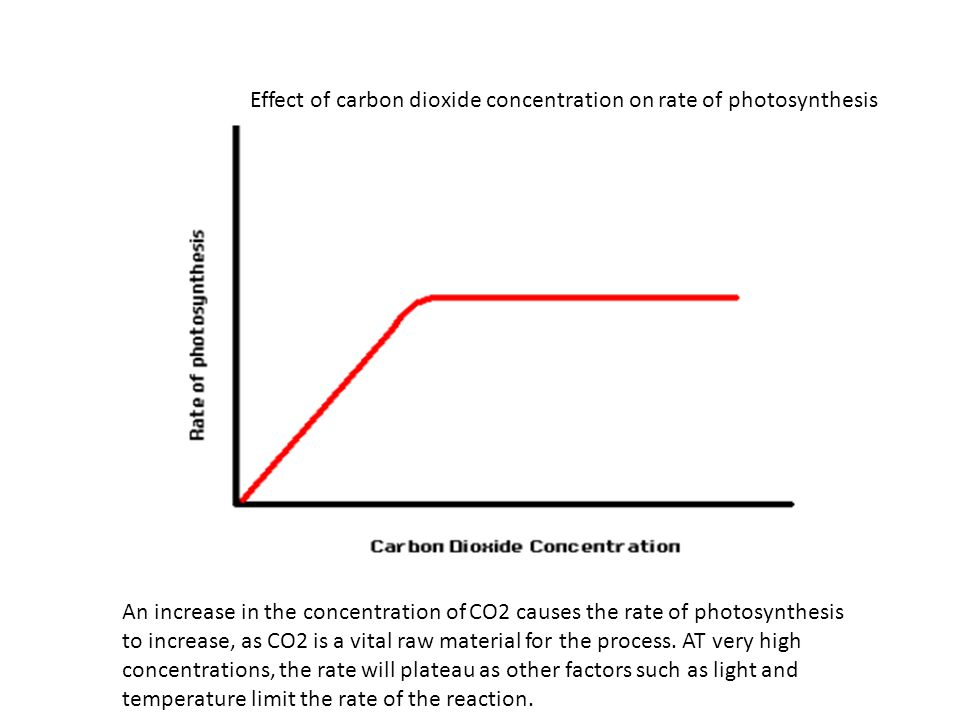 Effect of carbon dioxide concentration on rate of photosynthesis