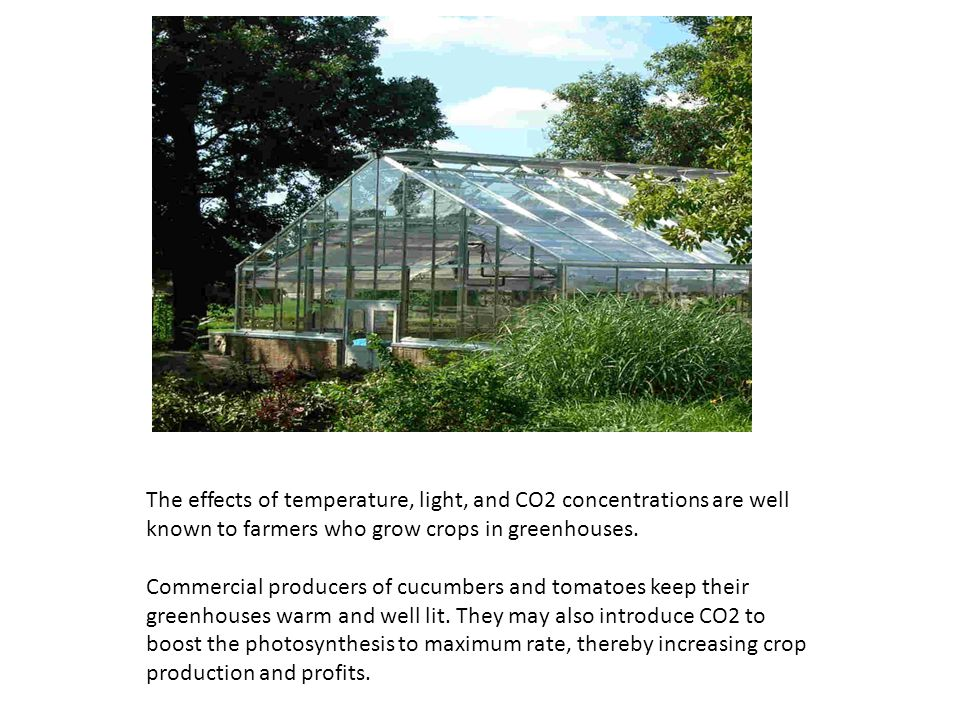The effects of temperature, light, and CO2 concentrations are well known to farmers who grow crops in greenhouses.