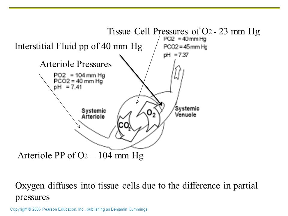 Tissue Cell Pressures of O2 - 23 mm Hg
