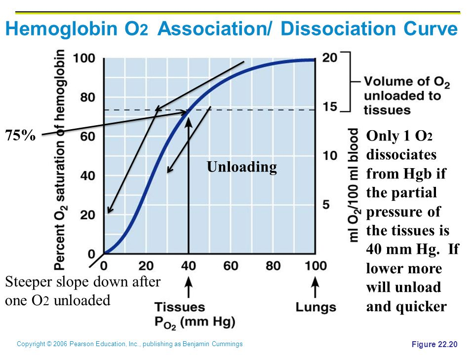 Hemoglobin O2 Association/ Dissociation Curve