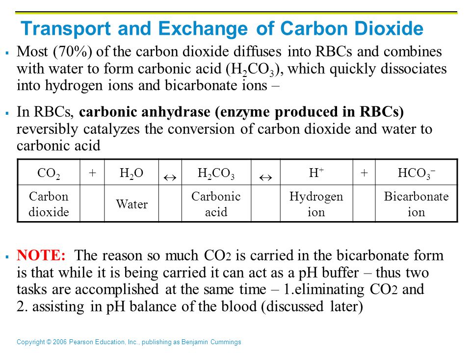 Transport and Exchange of Carbon Dioxide