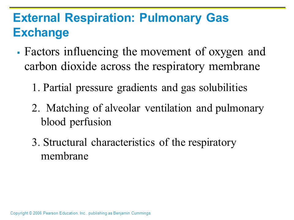 External Respiration: Pulmonary Gas Exchange