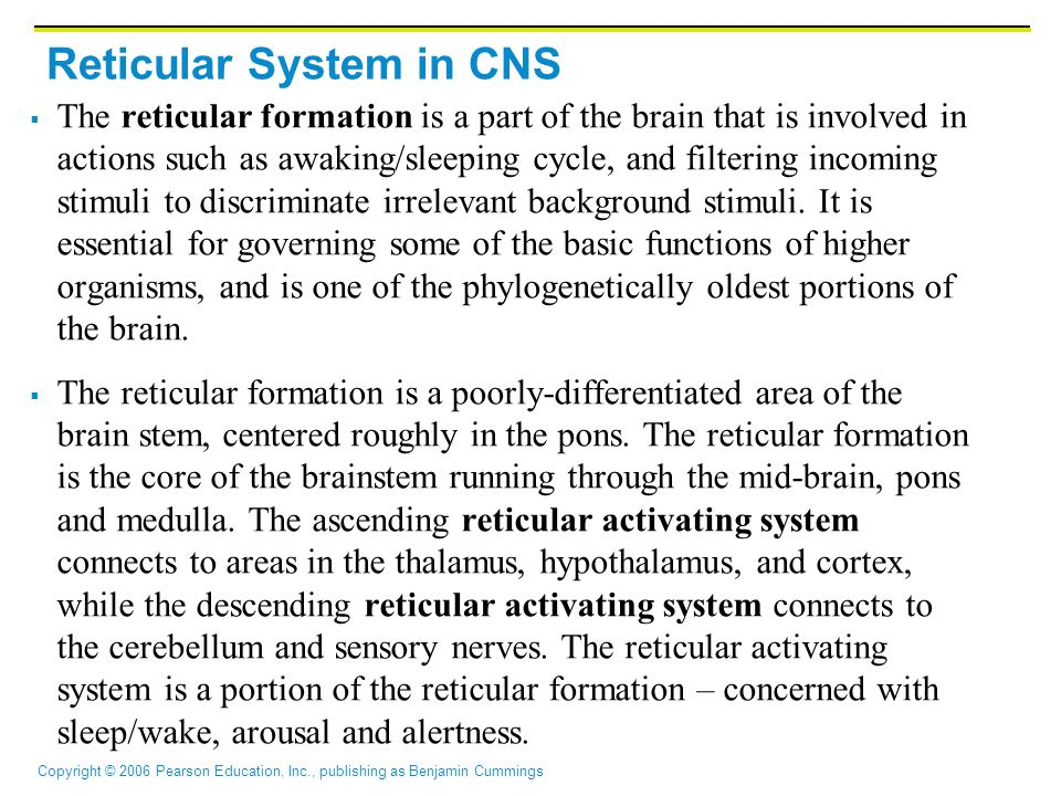 Reticular System in CNS