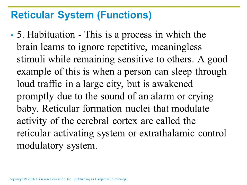 Reticular System (Functions)