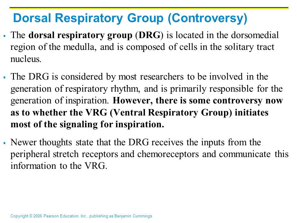 Dorsal Respiratory Group (Controversy)