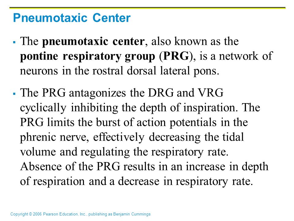 Pneumotaxic Center