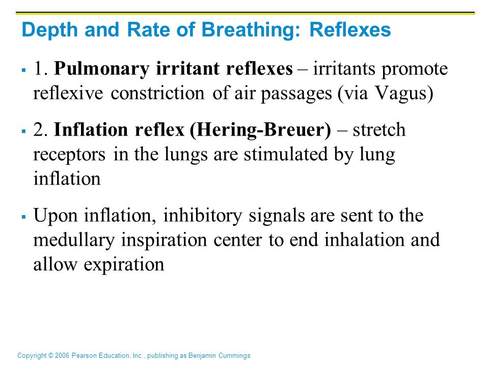 Depth and Rate of Breathing: Reflexes
