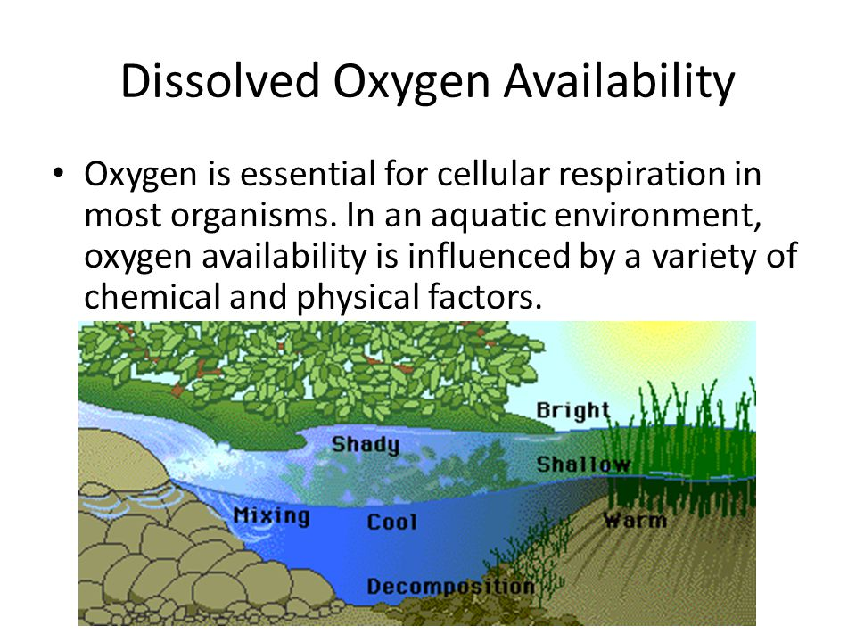 Dissolved Oxygen Availability