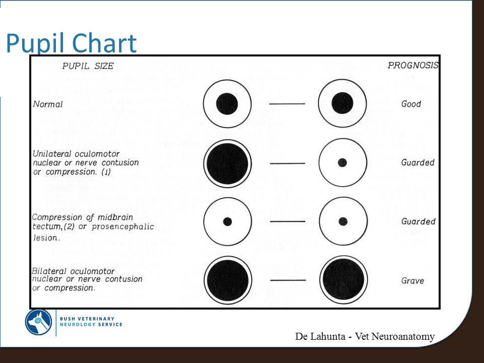 Pupil Chart De Lahunta - Vet Neuroanatomy