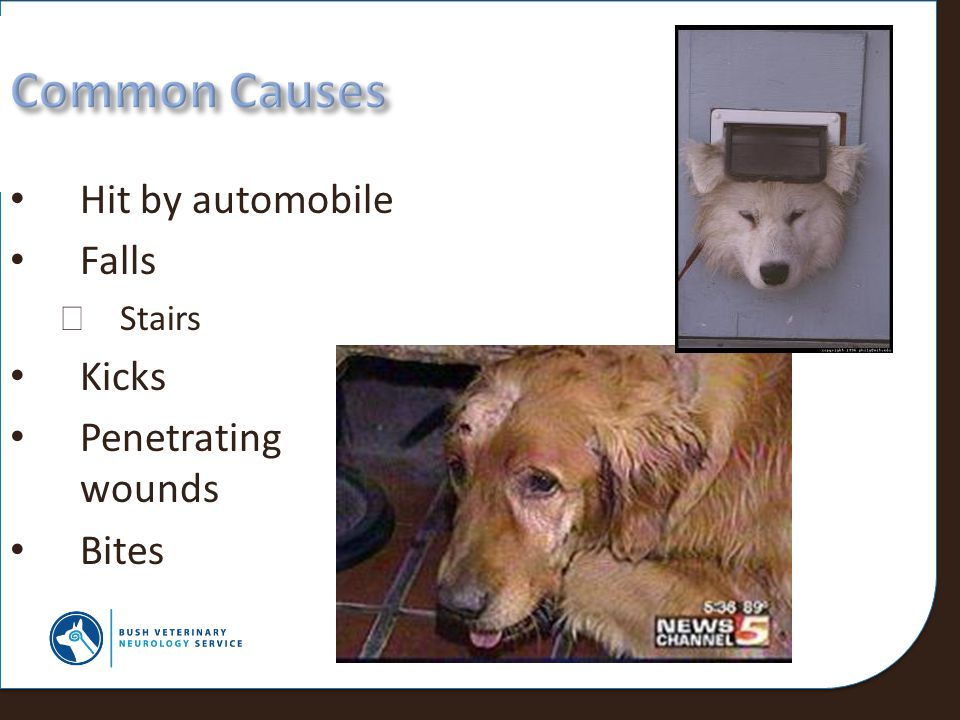 Common Causes Hit by automobile Falls Kicks Penetrating wounds Bites