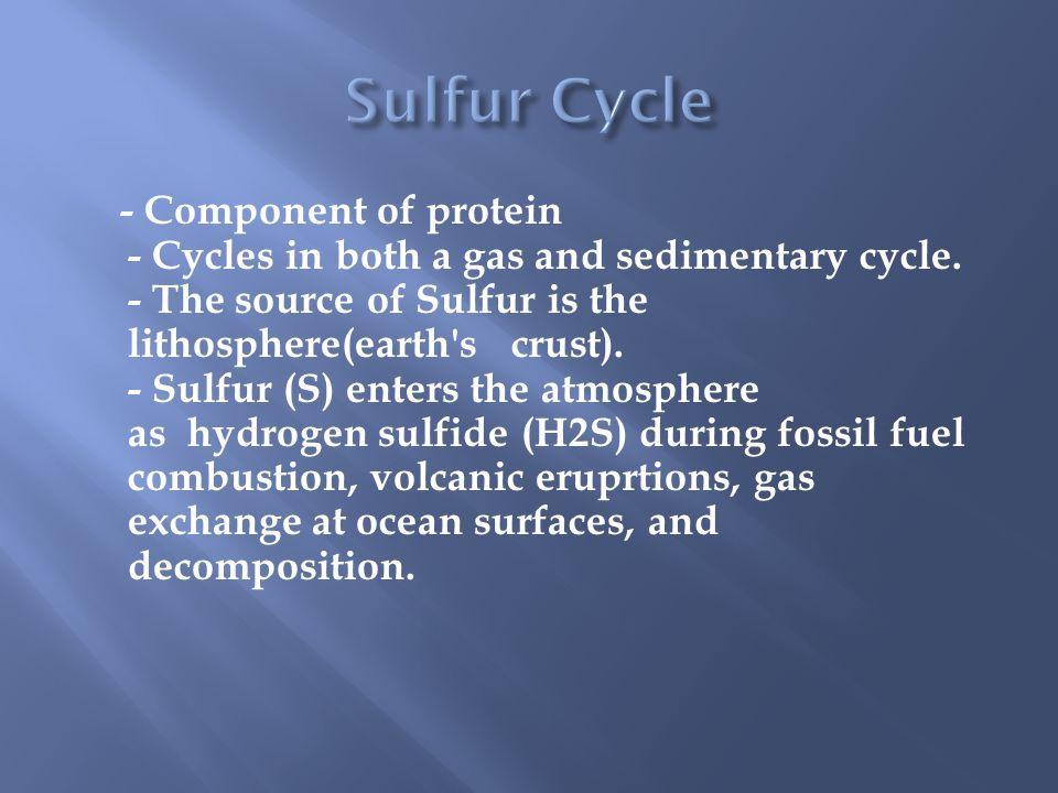 Sulfur Cycle
