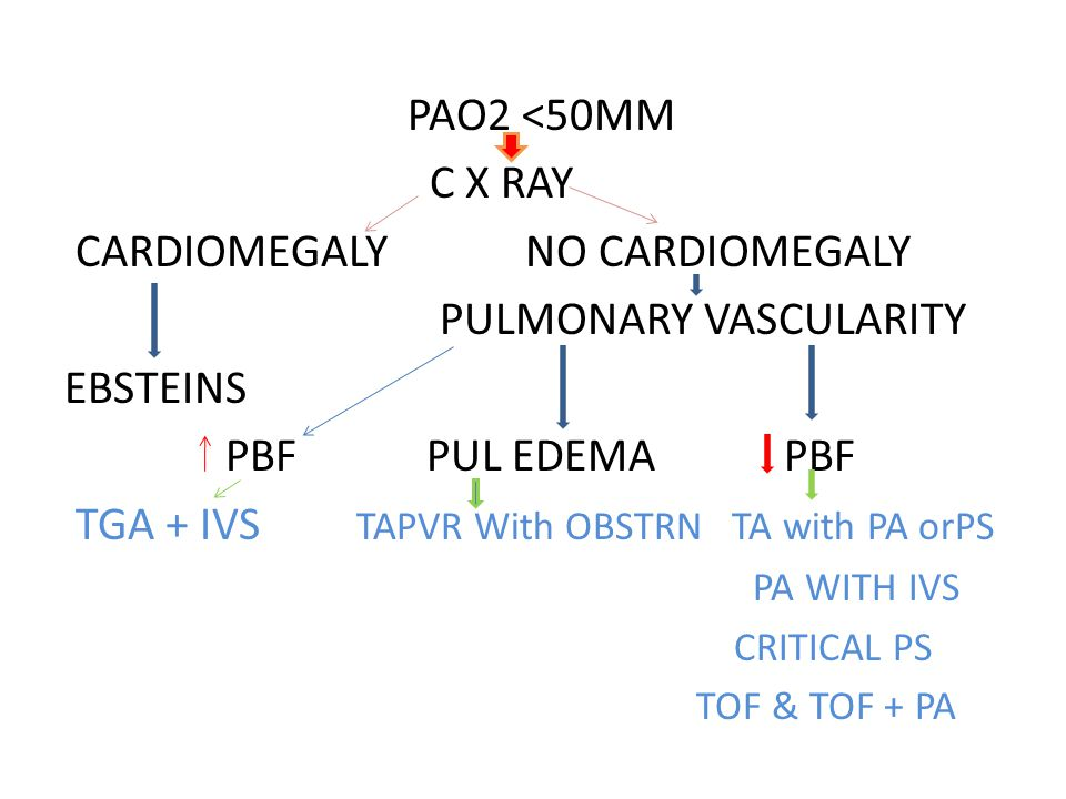 CARDIOMEGALY NO CARDIOMEGALY PULMONARY VASCULARITY EBSTEINS