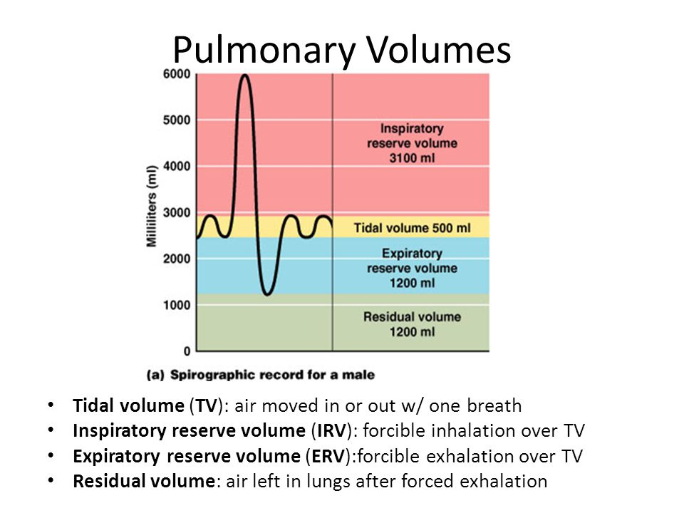 Pulmonary Volumes Tidal volume (TV): air moved in or out w/ one breath