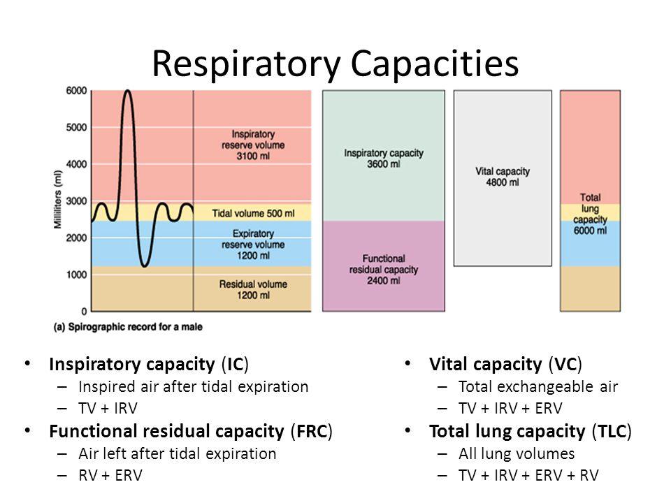 Respiratory Capacities