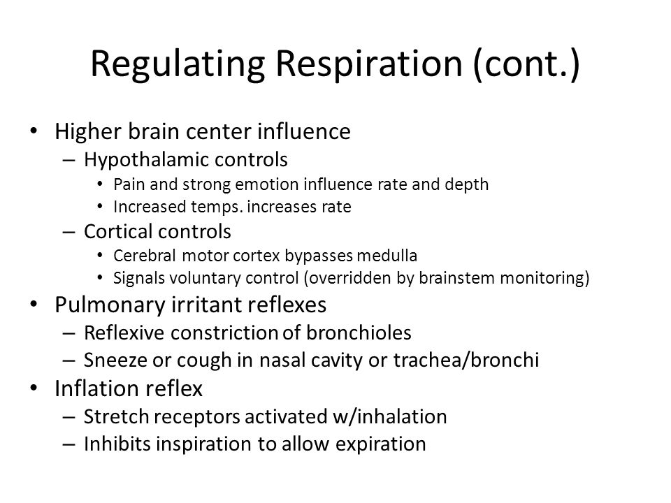 Regulating Respiration (cont.)