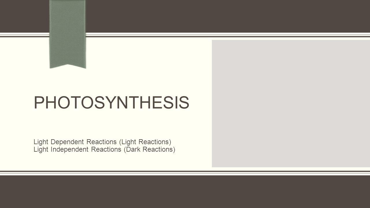 PHOTOSYNTHESIS Light Dependent Reactions (Light Reactions)