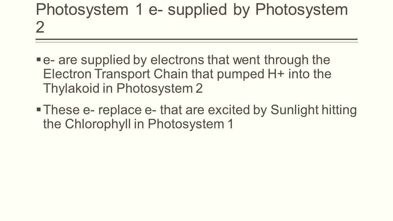 Photosystem 1 e- supplied by Photosystem 2