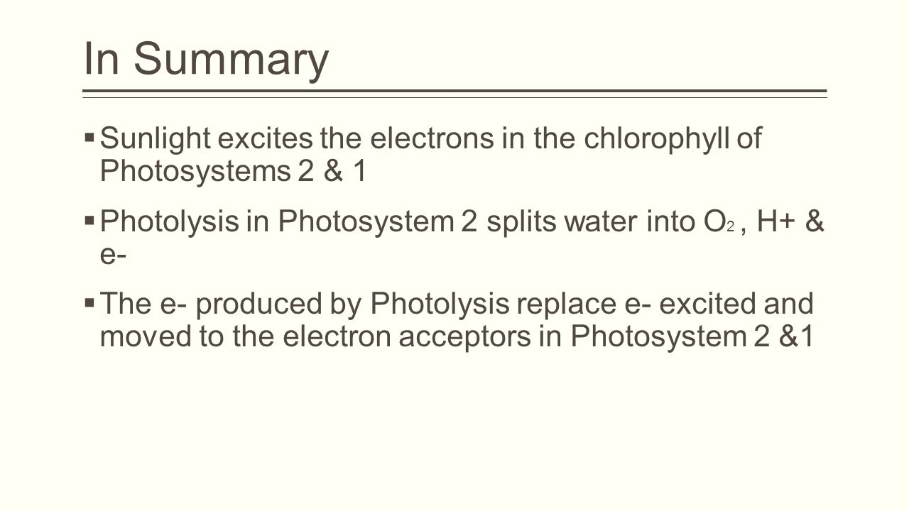 In Summary Sunlight excites the electrons in the chlorophyll of Photosystems 2 & 1. Photolysis in Photosystem 2 splits water into O2 , H+ & e-