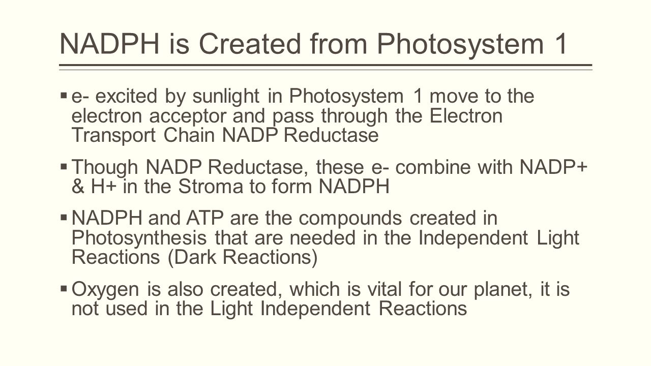 NADPH is Created from Photosystem 1