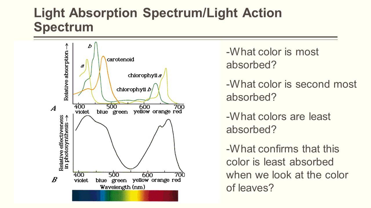 Light Absorption Spectrum/Light Action Spectrum