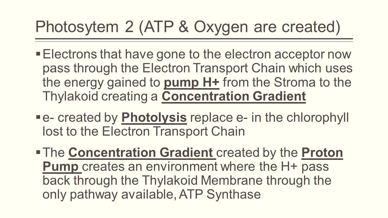 Photosytem 2 (ATP & Oxygen are created)