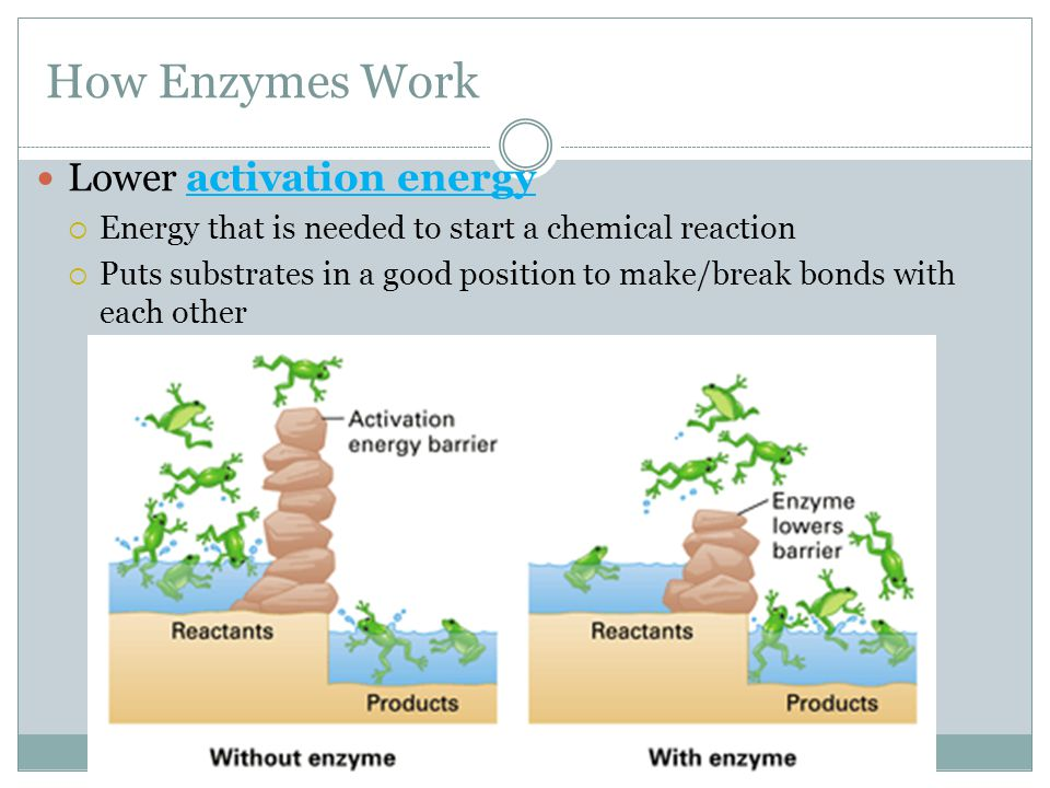 How Enzymes Work Lower activation energy