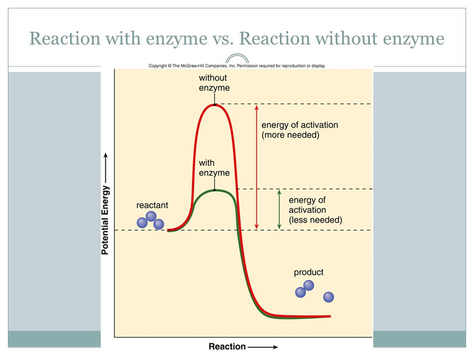 Reaction with enzyme vs. Reaction without enzyme