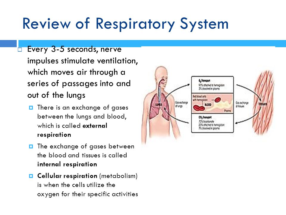 Review of Respiratory System