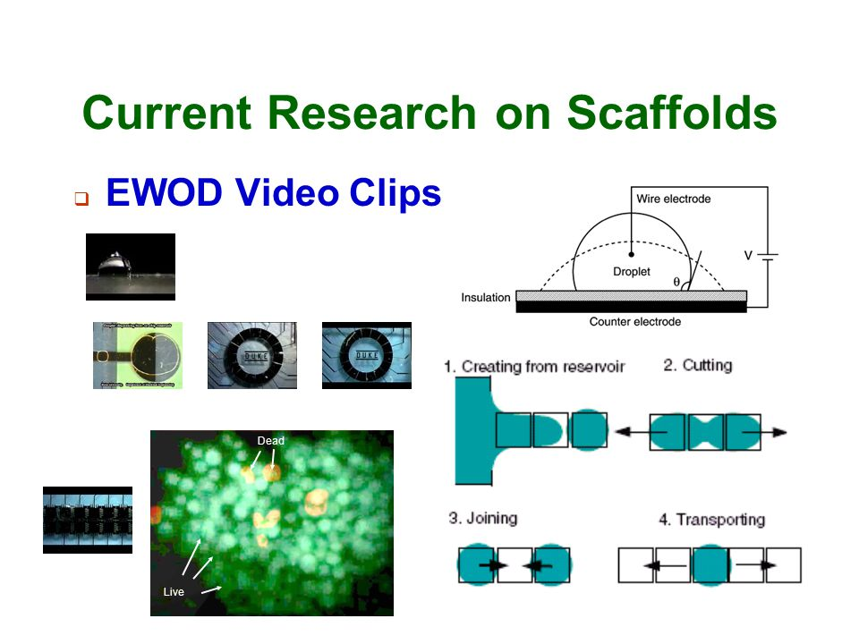 Current Research on Scaffolds
