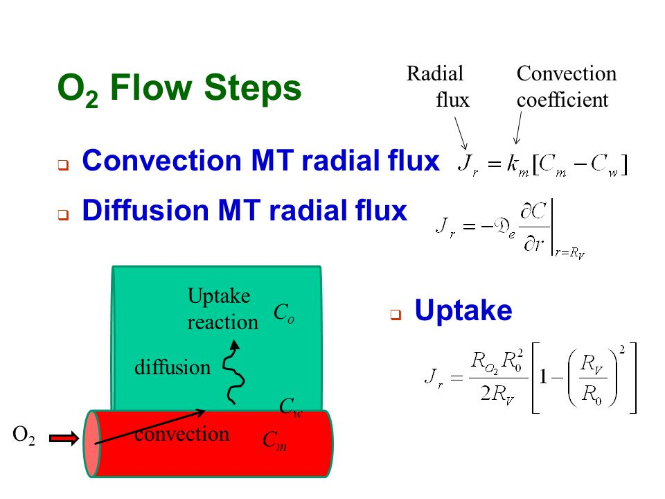 O2 Flow Steps Convection MT radial flux Diffusion MT radial flux